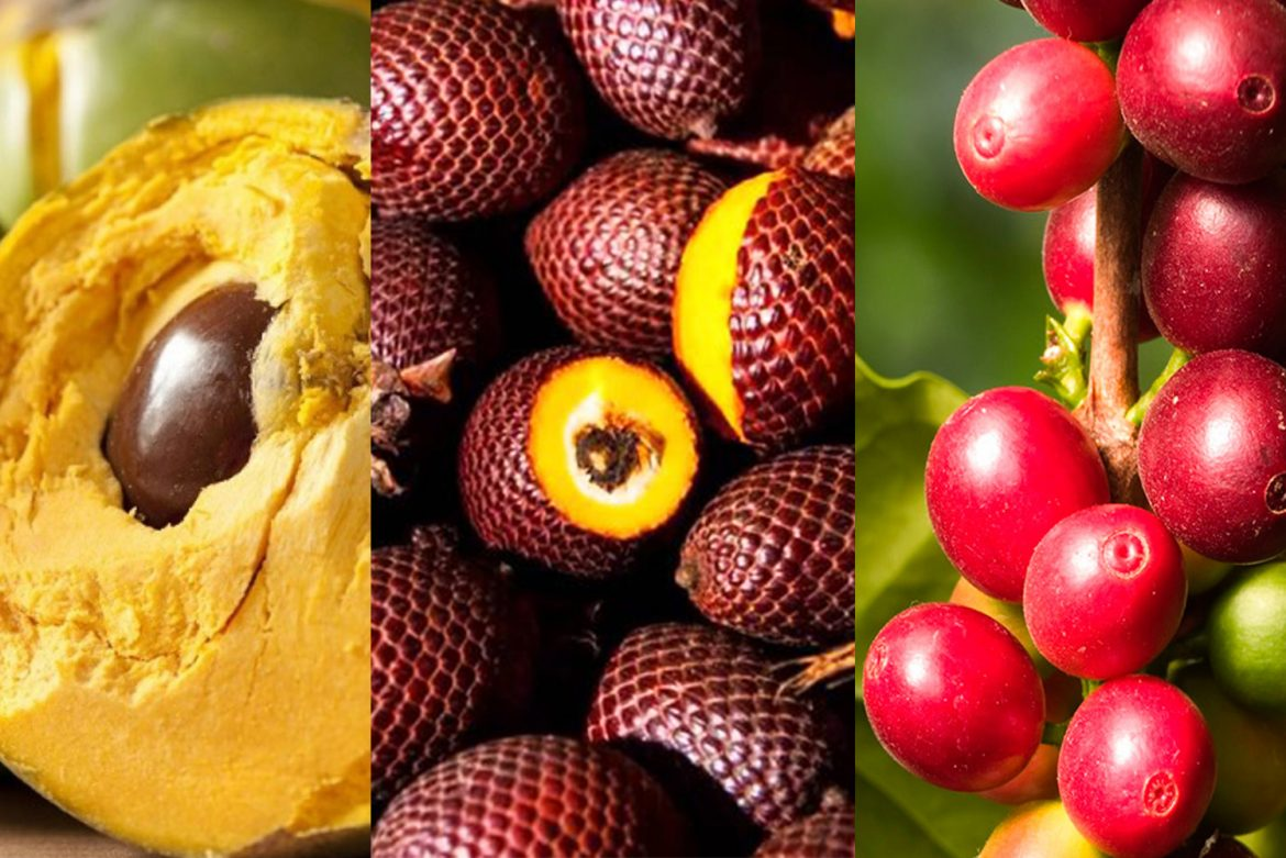 Peruvian Exotic fruits you Need to Know